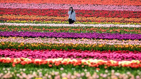 Torneo de Stuttgart y campo de tulipanes en Grevenbroich: el día en fotos