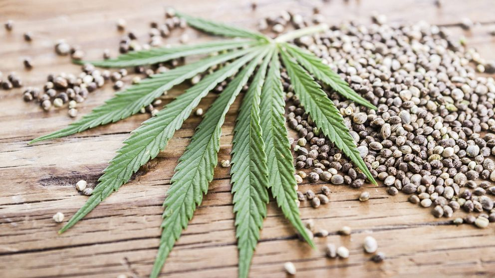 ¿A qué huelen los perfumes con cannabis?