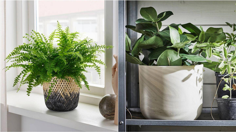Maceteros estilosos para decorar tu casa con plantas de Ikea. (Cortesía)