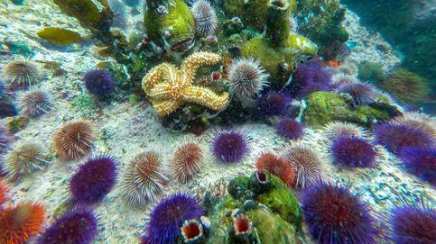 Una planta marina invasora se une a la lucha contra la crisis climática