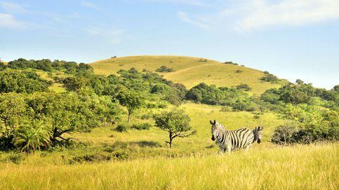 Safaris por África: lo que se puede ver en una ruta por Zambia, Sudáfrica y Botsuana