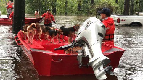 Rescatan a 6 perros encerrados con llave en una jaula en pleno huracán Florence