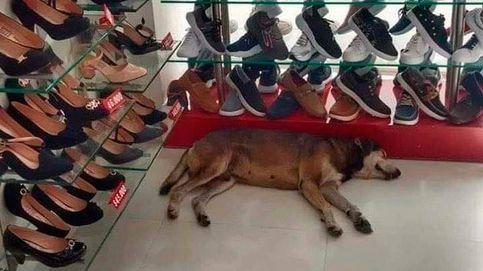 El dueño de una zapatería se niega a sacar a un perro callejero de su tienda