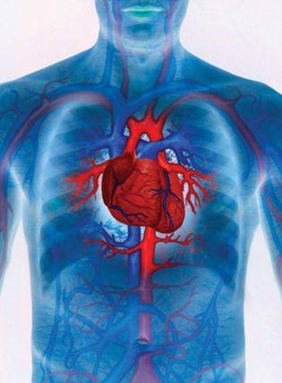 Foto: El riesgo de sufrir un evento cardiovascular es alto desde los 48 años en hombres