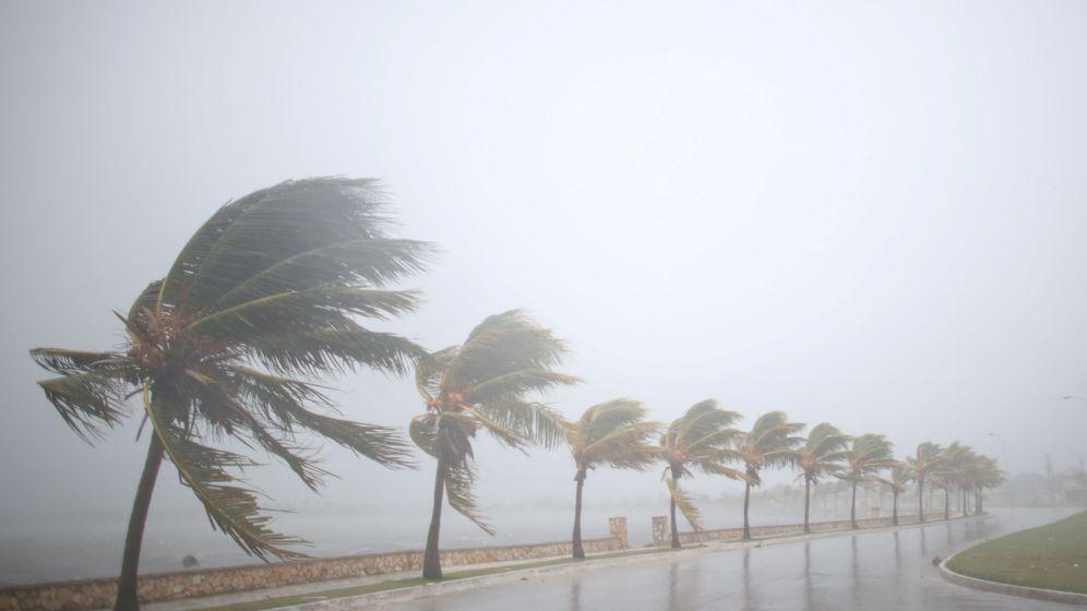 Foto: Palmeras golpeadas por el huracán Irma, a su paso por Cuba. (Reuters)