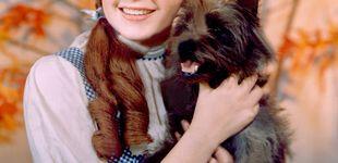 Post de 50 años sin Judy Garland: éxito, drogas e intento de suicidio de un icono LGTBI
