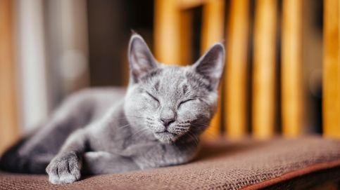 ¿Por qué ver vídeos de gatos es bueno para tu salud? Esta es la razón