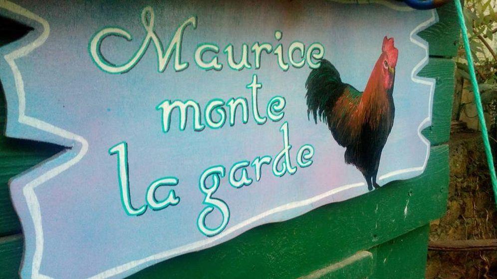Foto: 'Maurice hace guardia': cartel en la caseta del gallo