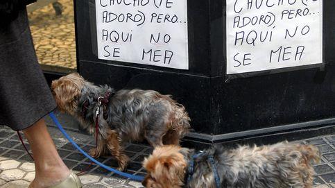 Gijón también obligará a los dueños de mascotas a limpiar sus orines