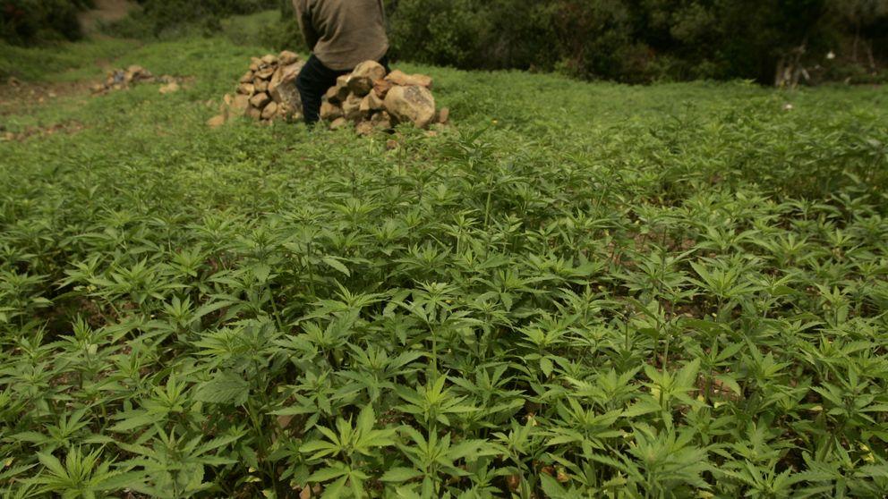 Marruecos y un cannabis legalizado