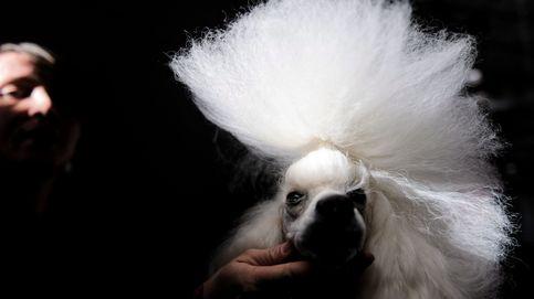 Show internacional de perros en Polonia