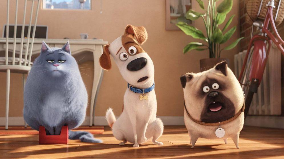 Foto: Fotograma de la película 'Mascotas'.