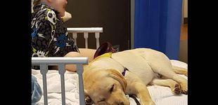 Post de Tres niños autistas no pueden entrar con su perro de asistencia en un camping