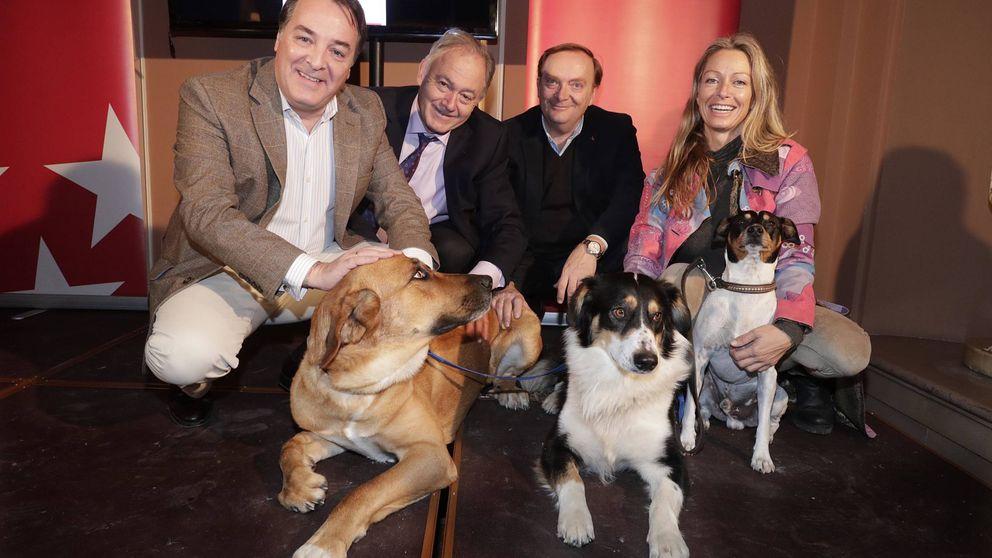 Las mascotas ya notan el fin de la crisis: el abandono de perros baja un 29%