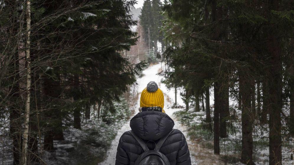 Foto: Un bosque se cierne sobre el frío finlandés. (iStock)