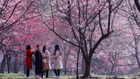La primavera ha llegado al mundo