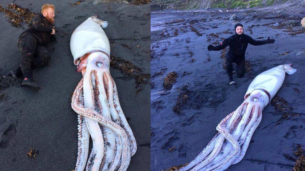 Tres hermanos encuentran un calamar de más de 4 metros en Nueva Zelanda