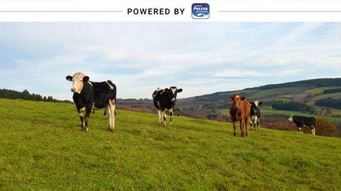 Leches de bienestar animal, pastoreo o ecológica: ¿en qué se diferencian?