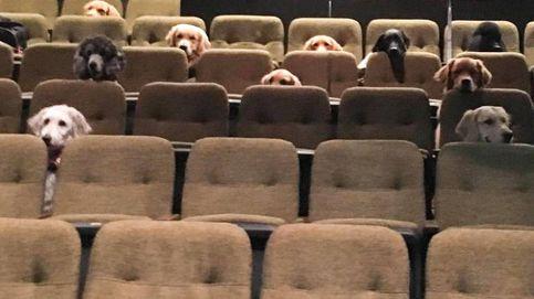 La foto que encandila a Internet: perros de servicio viendo un musical