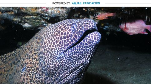 La pesadilla de la noche tiene forma (y boca) de pez morena