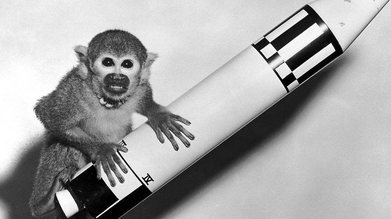Uno de los primates astronautas (NASA)