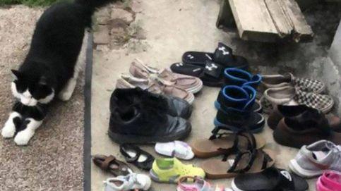 A este gato lo que más le gusta es robar los zapatos de sus vecinos