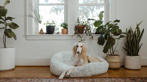 Camas para perros y gatos que harán que tu mascota descanse a pata suelta