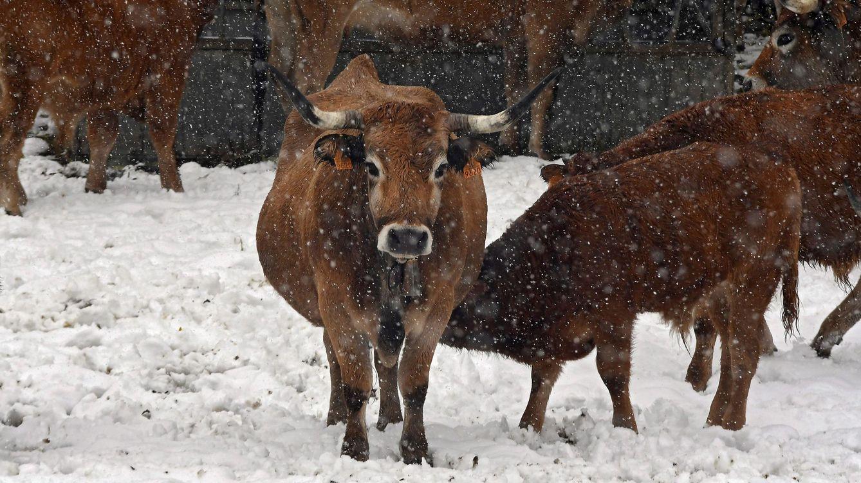 El 'chorro polar' deja una veintena de provincias en alerta por nieve, viento y frío