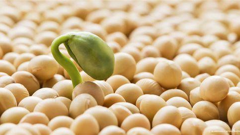 Las primeras patentes de Monsanto tocan a su fin: nacen los OGM genéricos