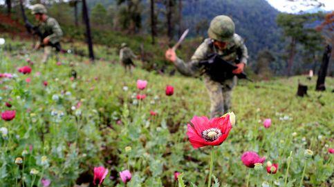Afganistán, donde se cultivan amapolas