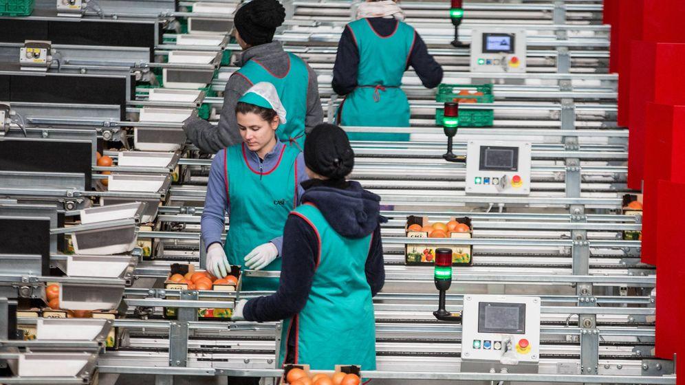 Foto: Un grupo de operarias selecciona y mete en cajas los tomates para su distribución. (D.B.)