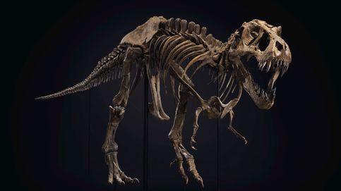 El T. Rex 'Stan' arrasa en Nueva York: su esqueleto se subasta por 27 M de euros