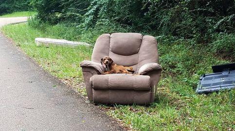 Abandonan a un cachorro en su sofá en mitad de una carretera desierta