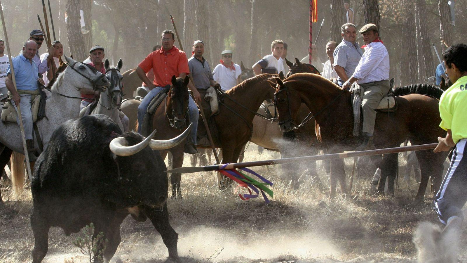 Foto: Fotografía de archivo tomada en Valladolid de la celebración del Toro de la Vega, en Tordesillas. (Efe)