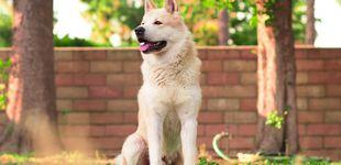 Post de La increíble reacción de una perra cuando la llaman