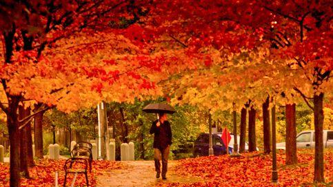 Curiosidades sobre el otoño: ¿eres un experto en esta época del año?