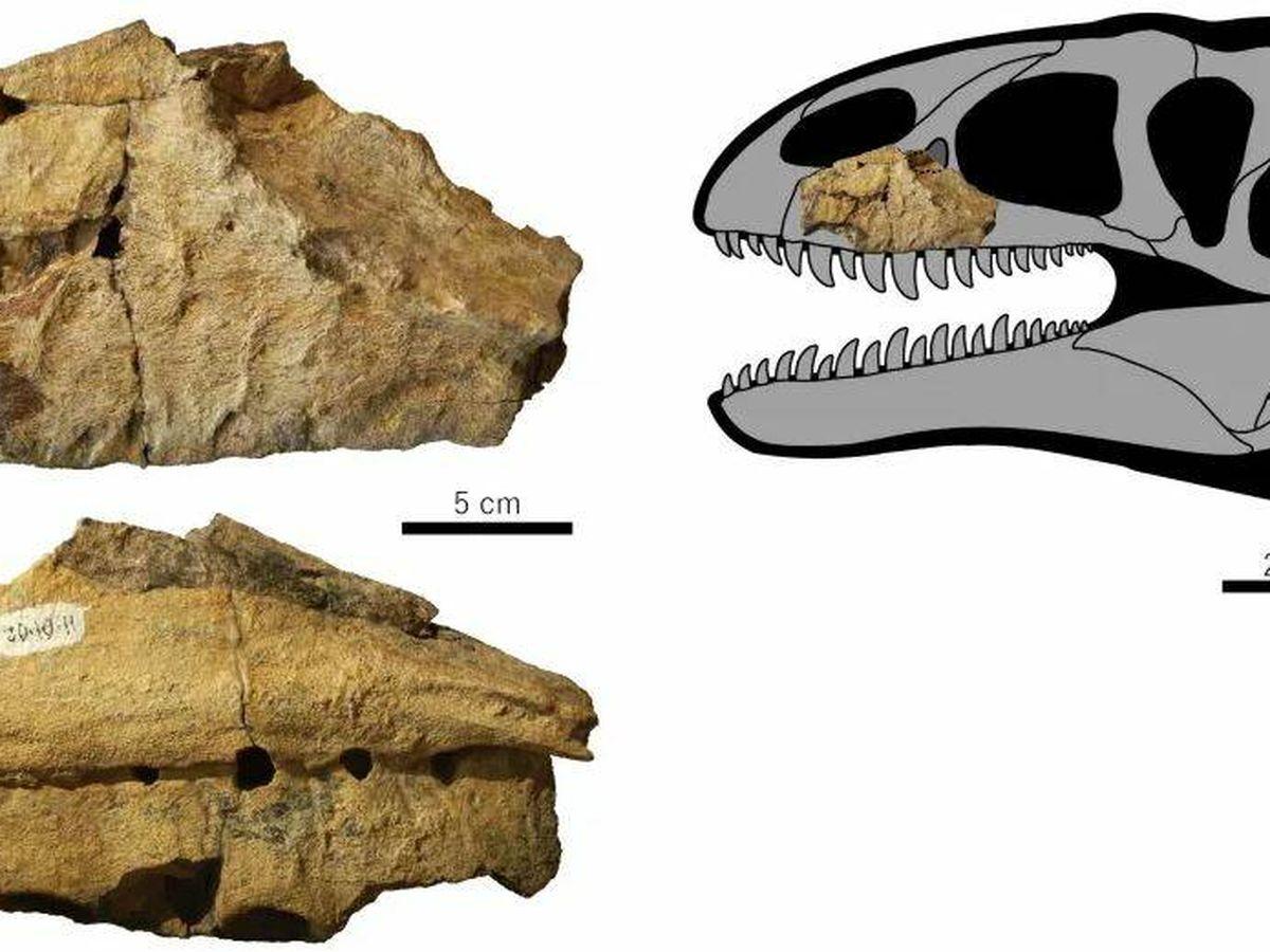 Foto: Imagen del Ulughbegsaurus uzbekistanensis (Creative Commons)