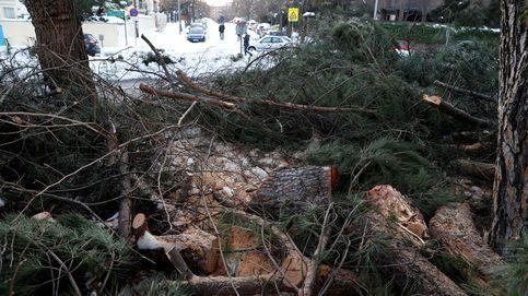 ¿Dónde van los árboles de Madrid cuando la nieve los troncha? A un gran cuello de botella