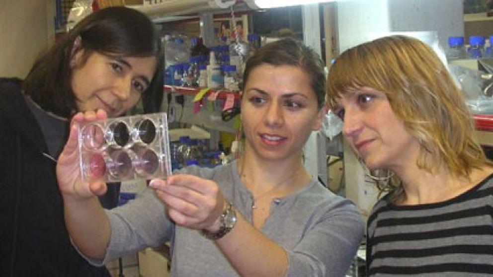 Científicas españolas consiguen resolver algunas limitaciones de las células madre inducidas