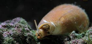 Post de Encuentra una de las criaturas marinas más venenosas del mundo en su pecera