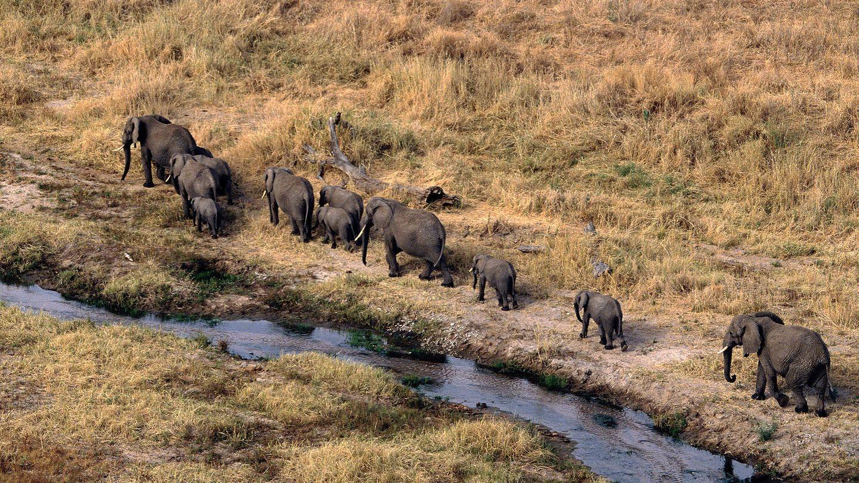 Elefantes africanos. (Andoni Canela)