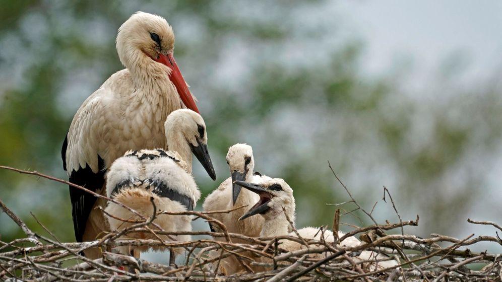 Foto: Una cigüeña con sus crías