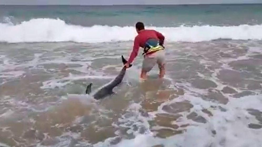 Foto: Los dos deportistas remolcaron al delfín rápidamente hacia el agua para que no sufriera (Foto: Facebook)