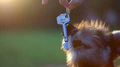 Mis inquilinos acaban de comprar perro, ¿puedo rescindir el contrato de alquiler?