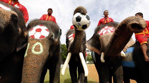 Elefantes ganan 2-1 a humanos en un partdio de fúltbol