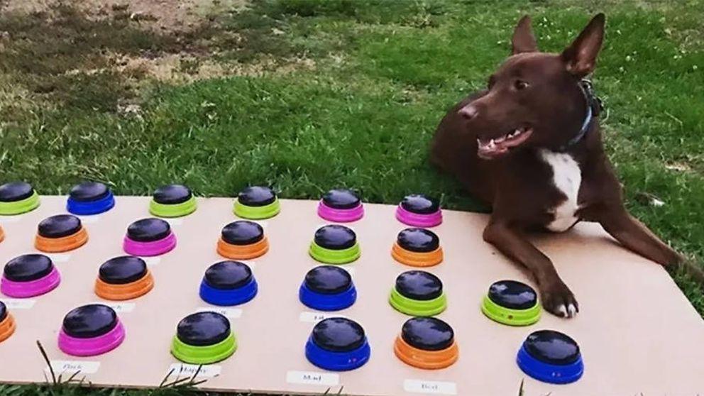 El truco de una psicóloga para enseñar a 'hablar' a su perra: ya sabe 29 palabras