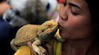 El secreto del sueño humano podría estar en el dragón barbudo australiano