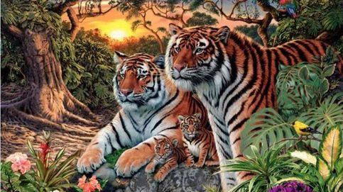 El último acertijo visual: ¿cuántos tigres puedes ver en la imagen?