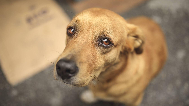 Tu perro es un privilegiado: el 70% de sus congéneres vive en la calle