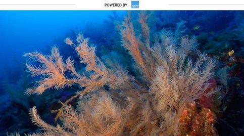 Coral negro, el tesoro marino con el que se hacen joyas